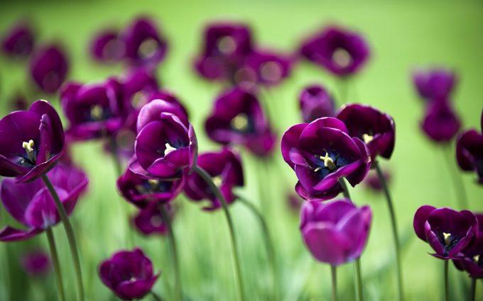 purple flower images