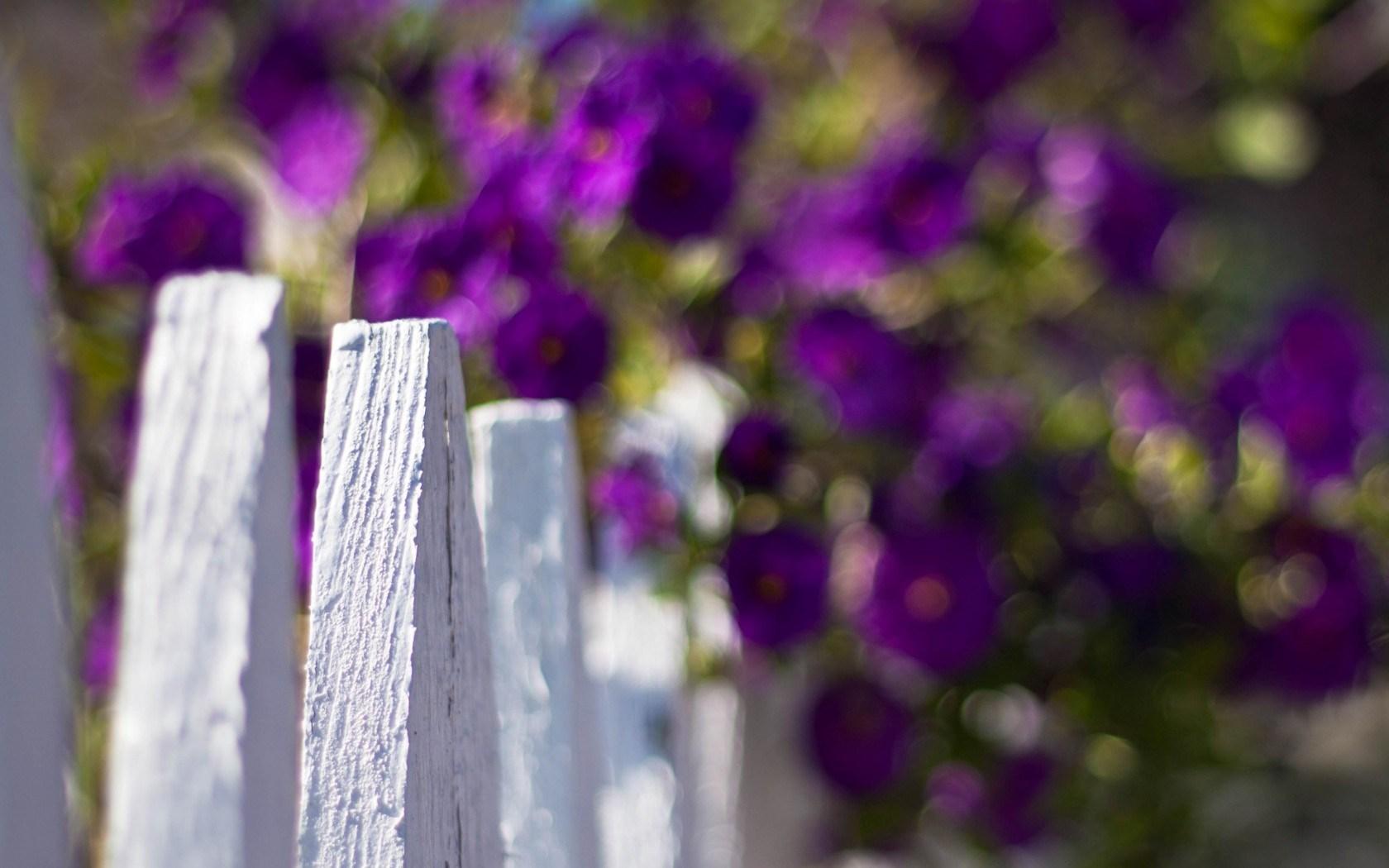 purple flowers A10