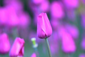 purple flowers A12