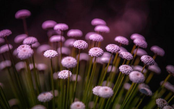 purple flowers A14