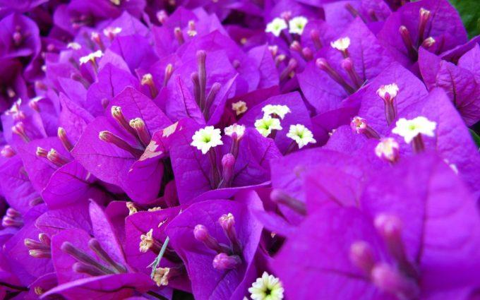 purple flowers A17