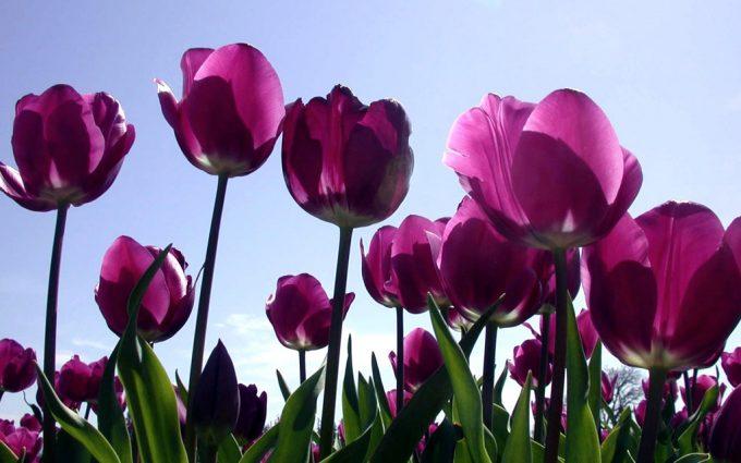 purple flowers A21