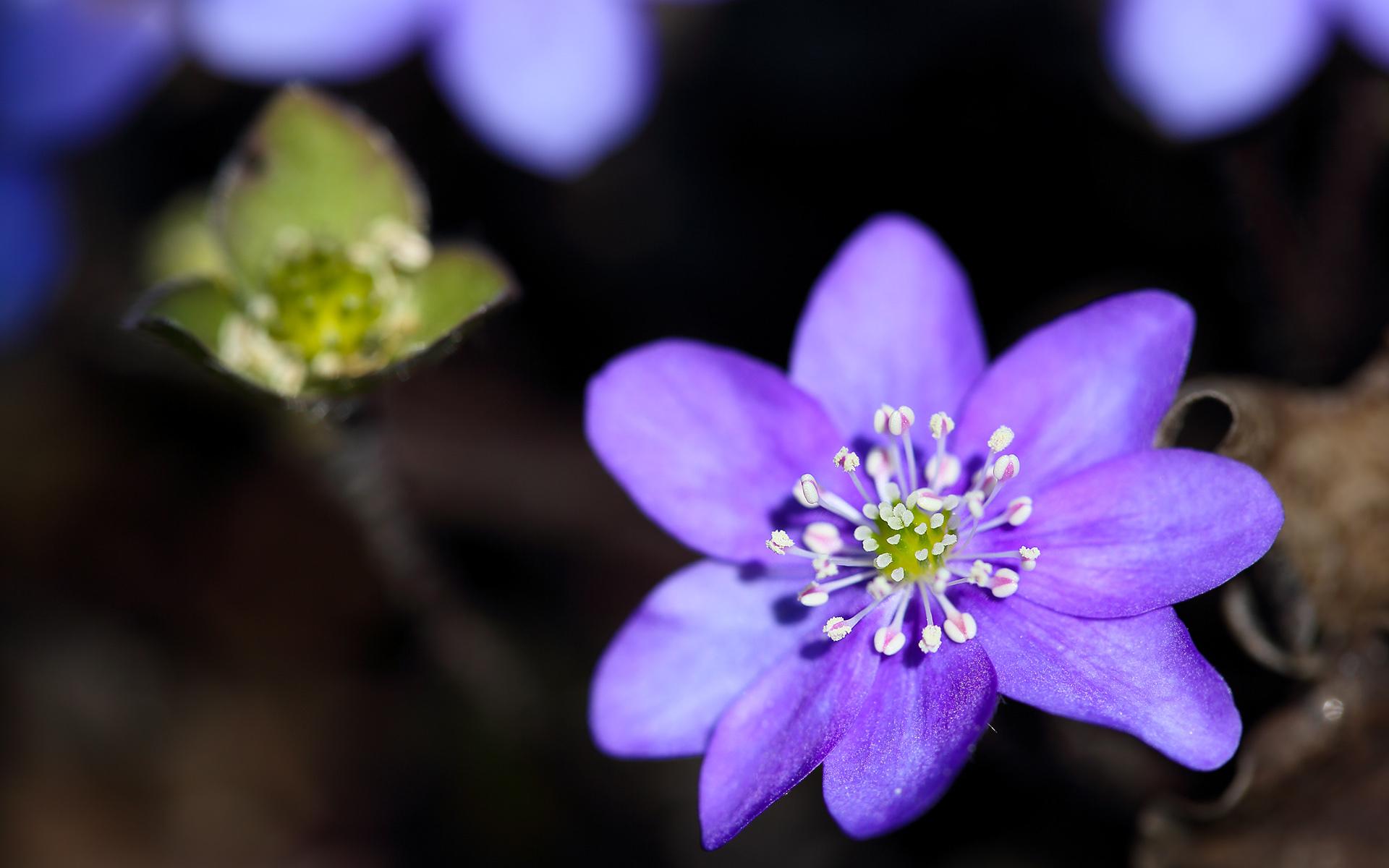 purple flowers A25