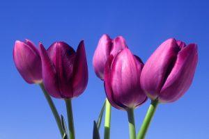 purple flowers A3