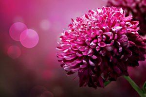 purple flowers A4
