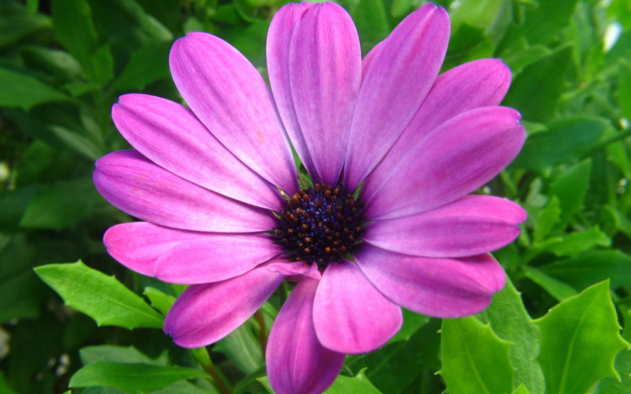 purple flowers A5