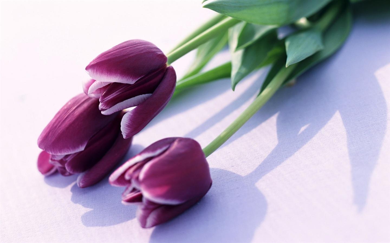 purple flowers A6