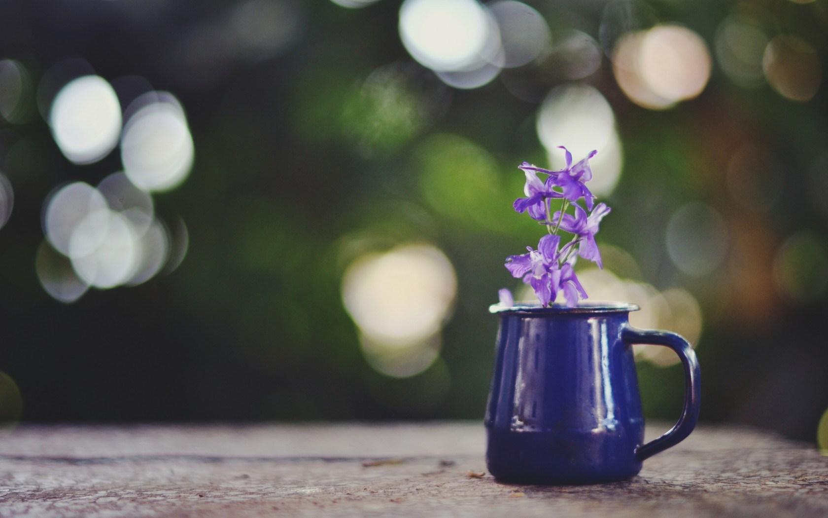 purple flowers A7