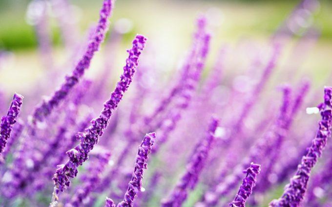 purple flowers A9
