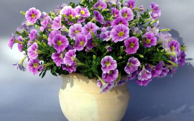 purple flowers photos