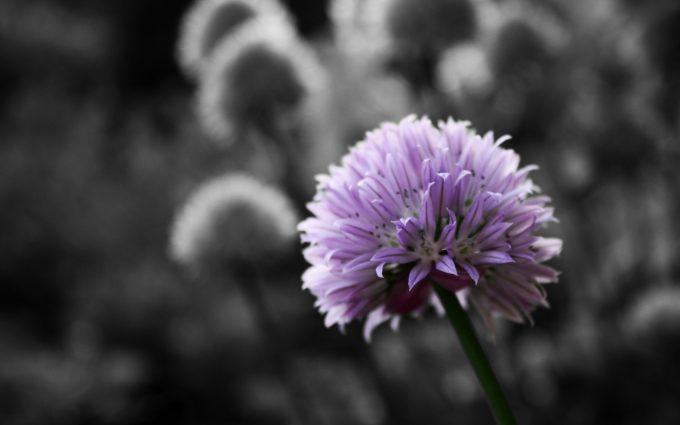 purple images hd