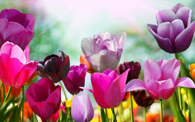 purple wallpaper flowers