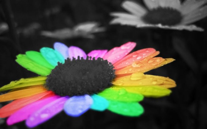 rainbow flower cute