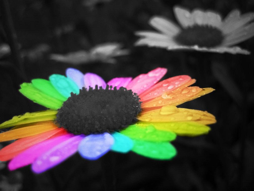 rainbow flower cute