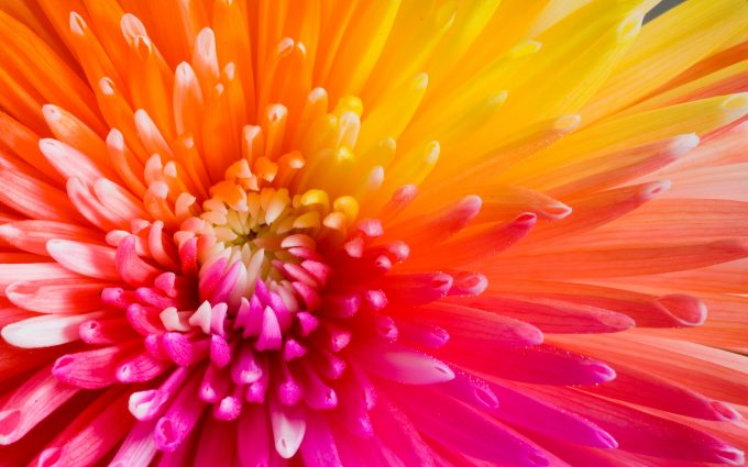 rainbow flower picture