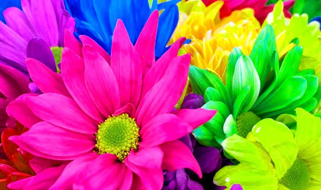 Rainbow flower wallpaper desktop