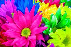 rainbow flowers desktop background