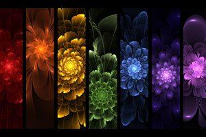 rainbow flowers images