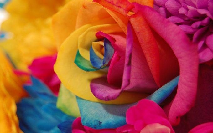 rainbow flowers wallpaper