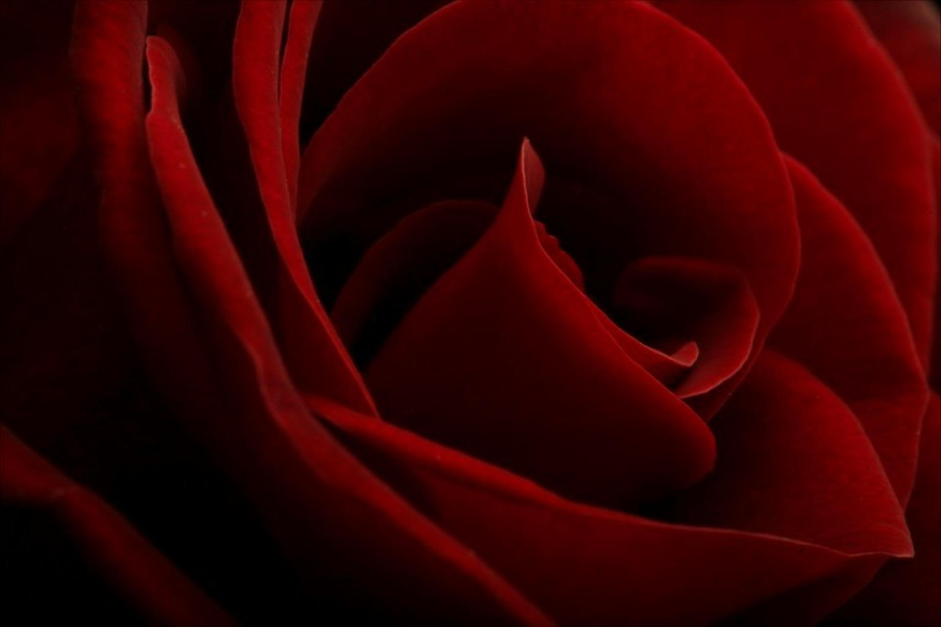 red and black love wallpapers - photo #22