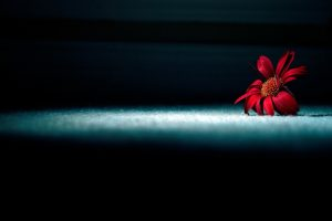 red flowers wallpaper A14