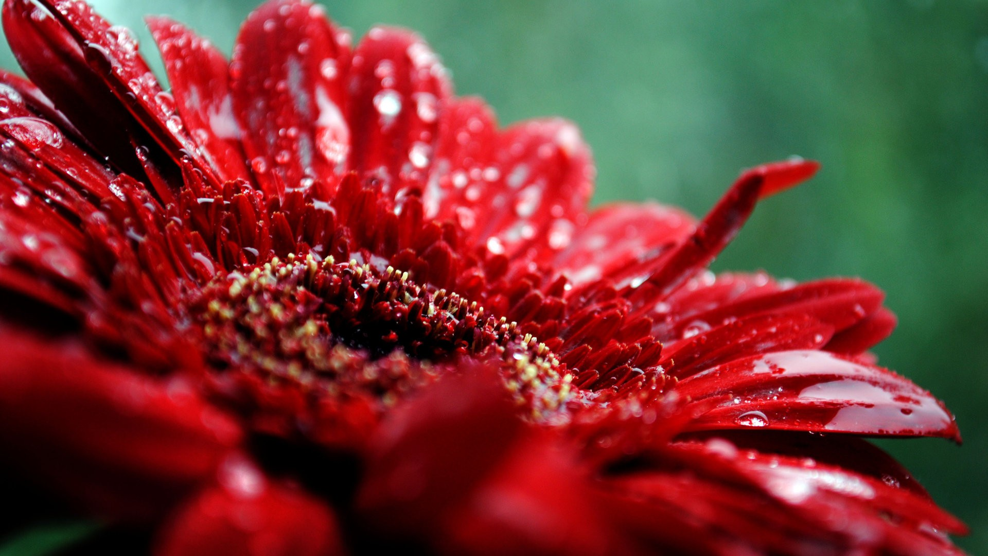 Red flowers wallpaper a6 hd desktop wallpapers 4k hd - Red flower desktop wallpaper ...