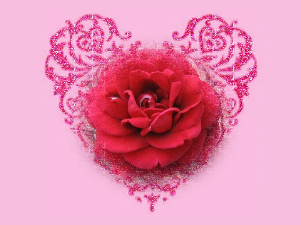 Red rose wallpapers hd hd desktop wallpapers 4k hd - Hd flower wallpaper rose ...
