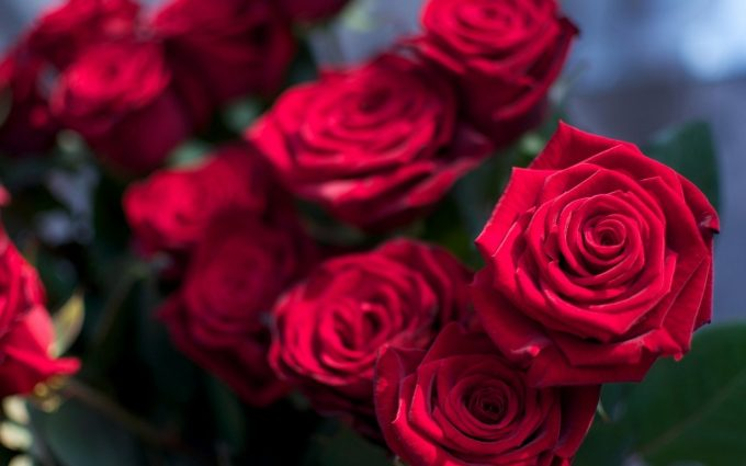 red roses wallpaper free download