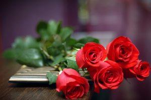 rose hd