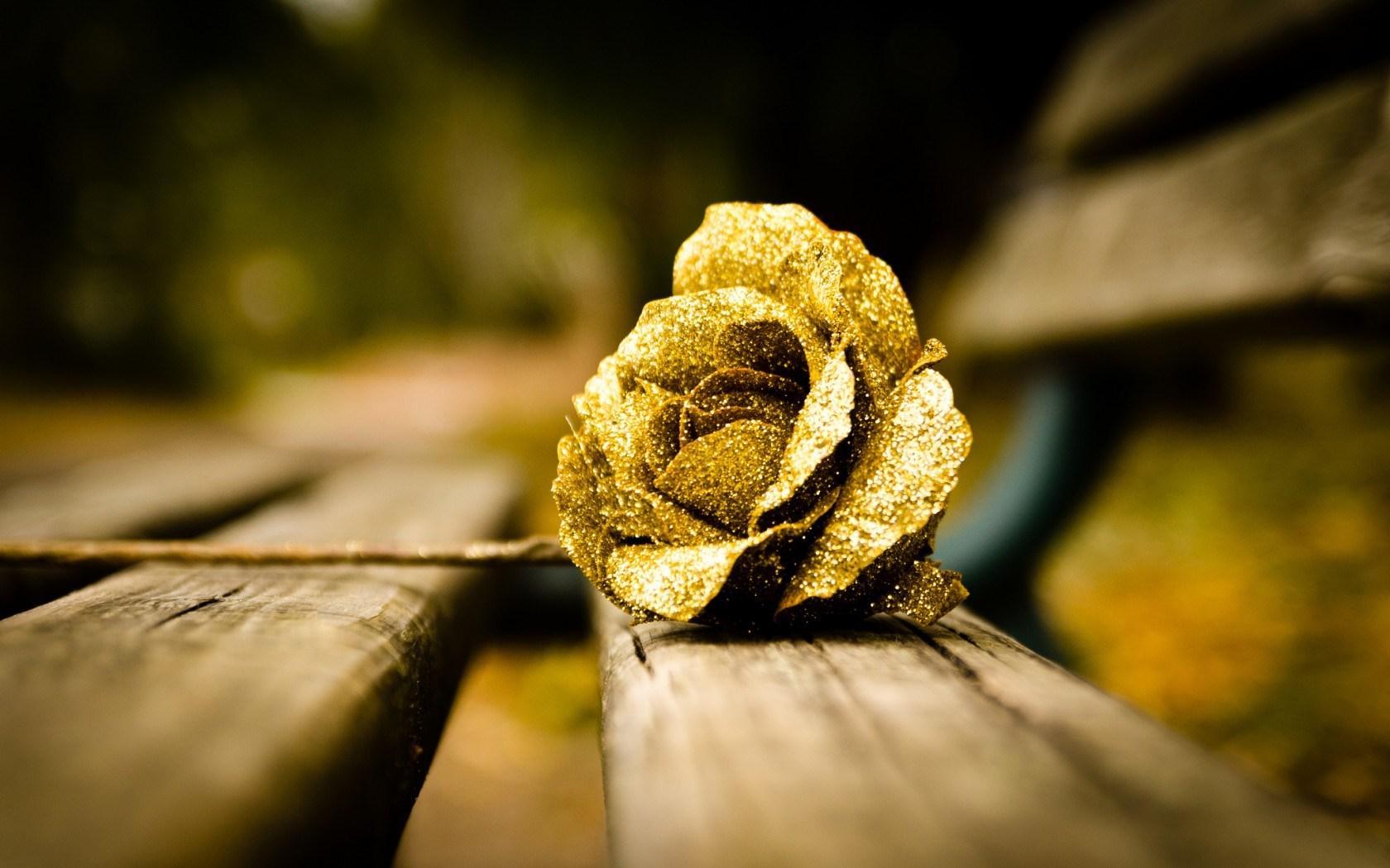 rose photos free download
