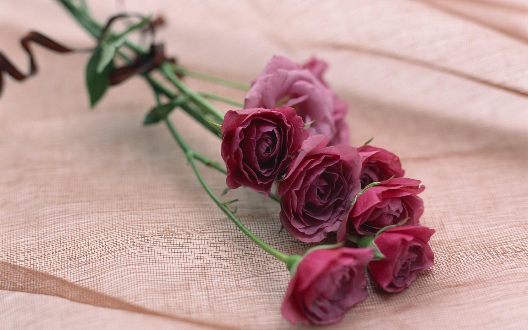 rose photos wallpaper