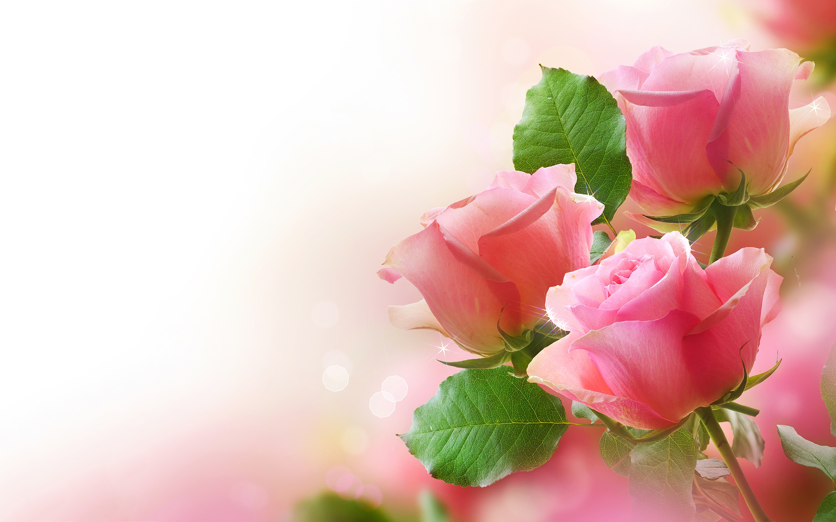 rose wallpapers free download