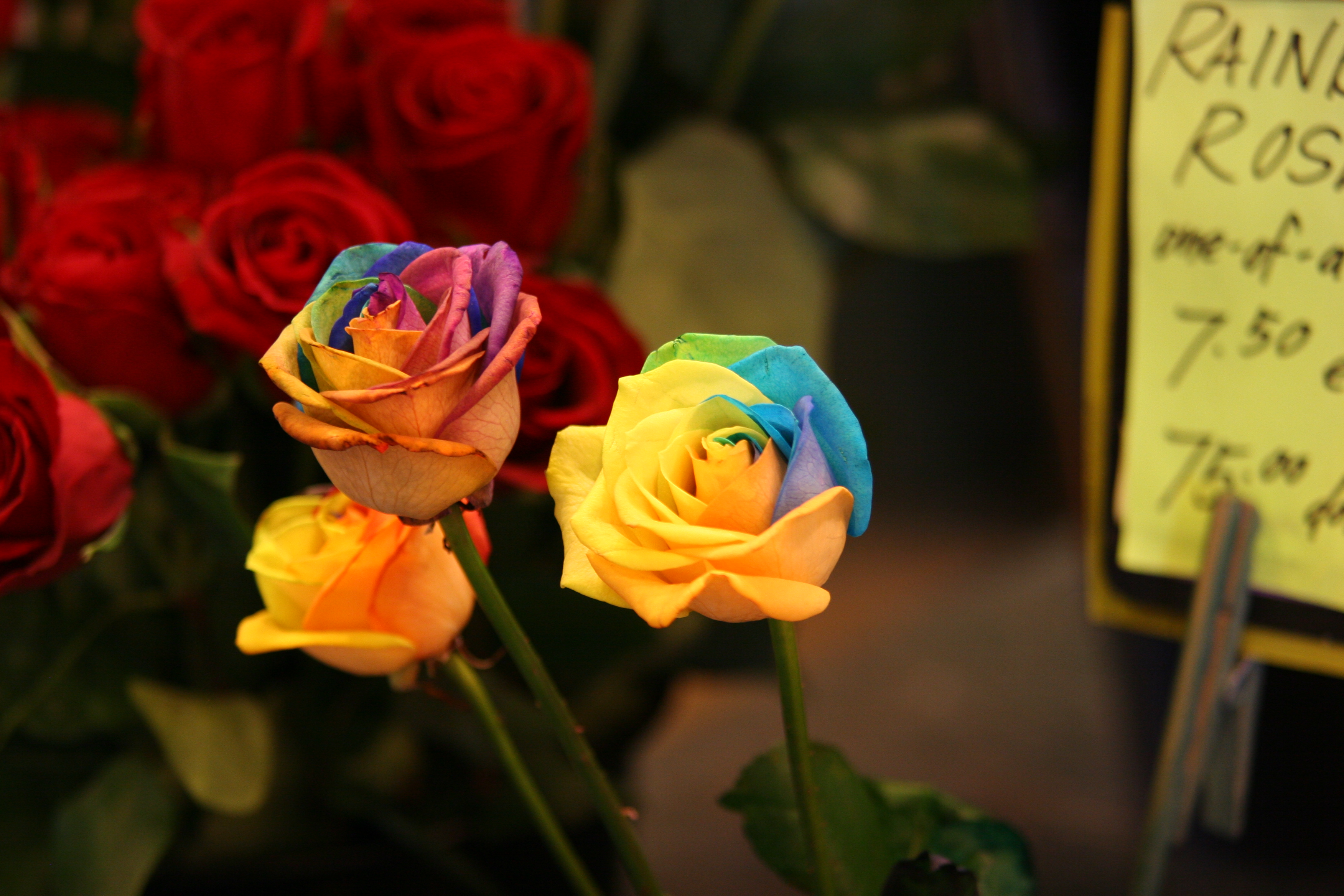 roses images download