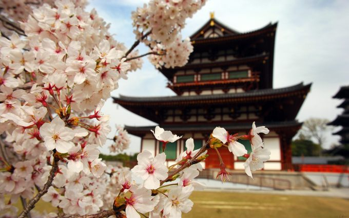 sakura flower download