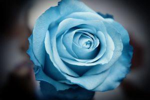 serene flower