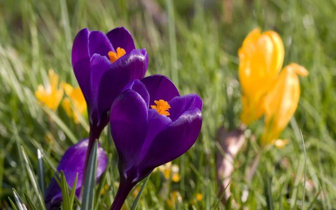 spring beautiful flowers