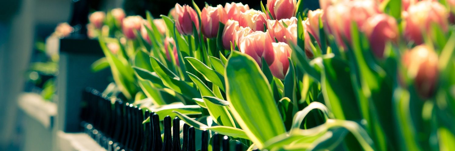 spring city tulips wallpaper - photo #1