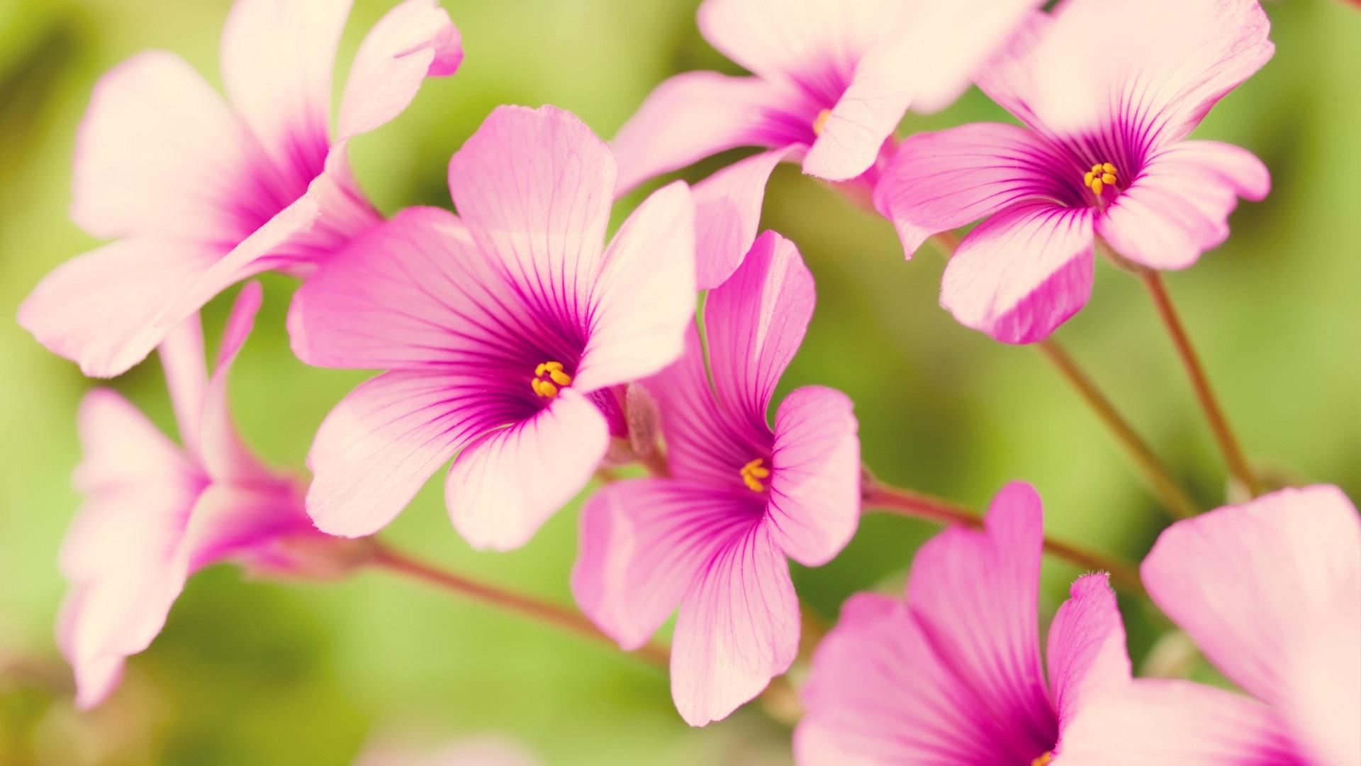 Spring flower screensavers hd desktop wallpapers 4k hd spring flower screensavers mightylinksfo
