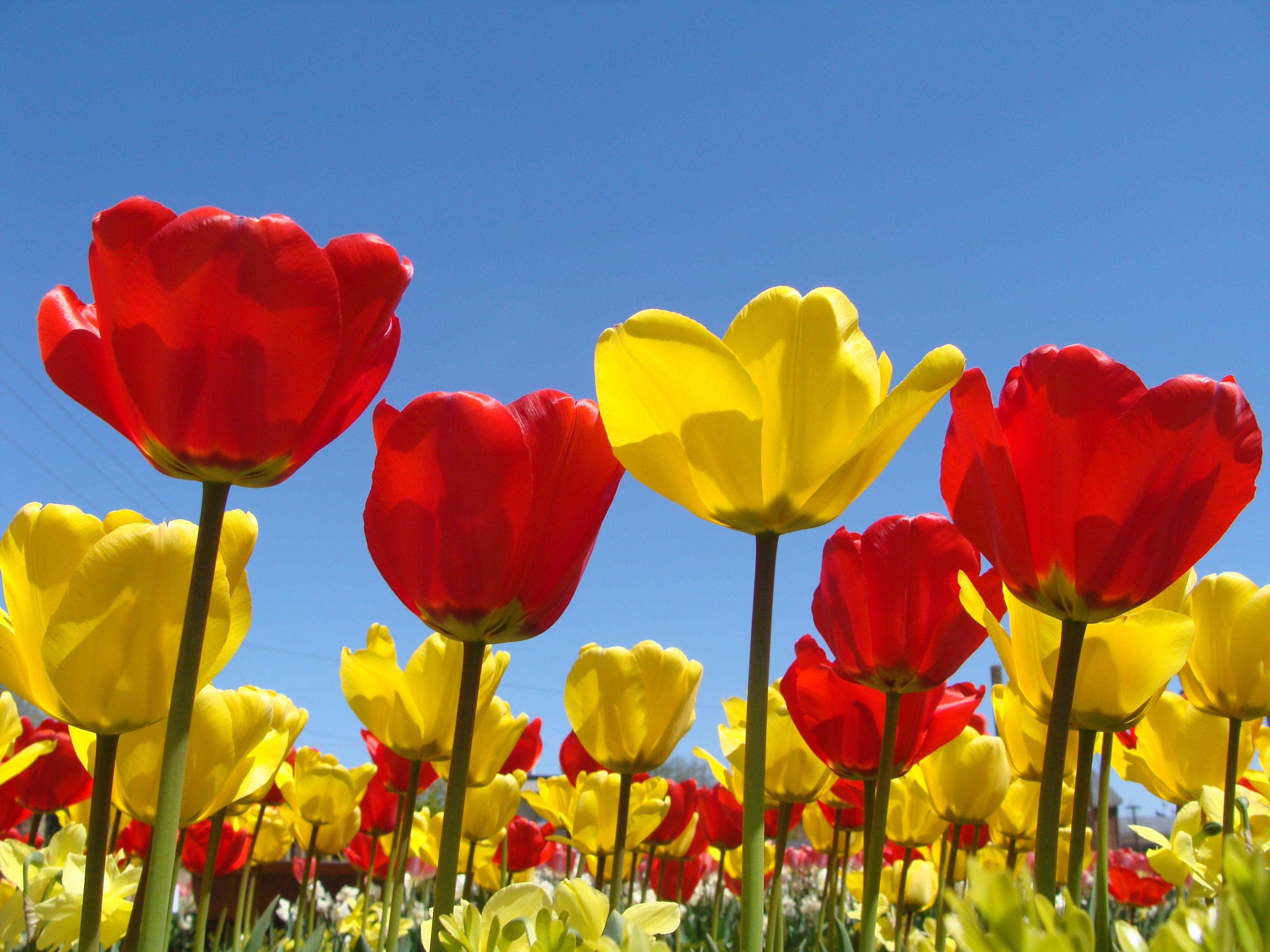 Spring flower wallpaper backgrounds hd desktop wallpapers 4k hd timeline mightylinksfo