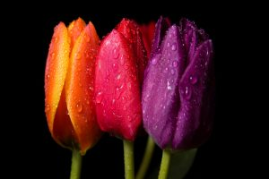 spring flowers background images