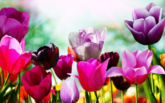 spring flowers background nature