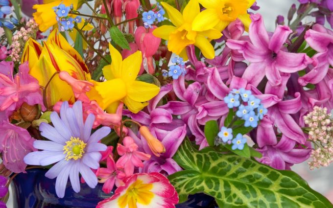 spring flowers images free