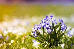 spring flowers nature cool