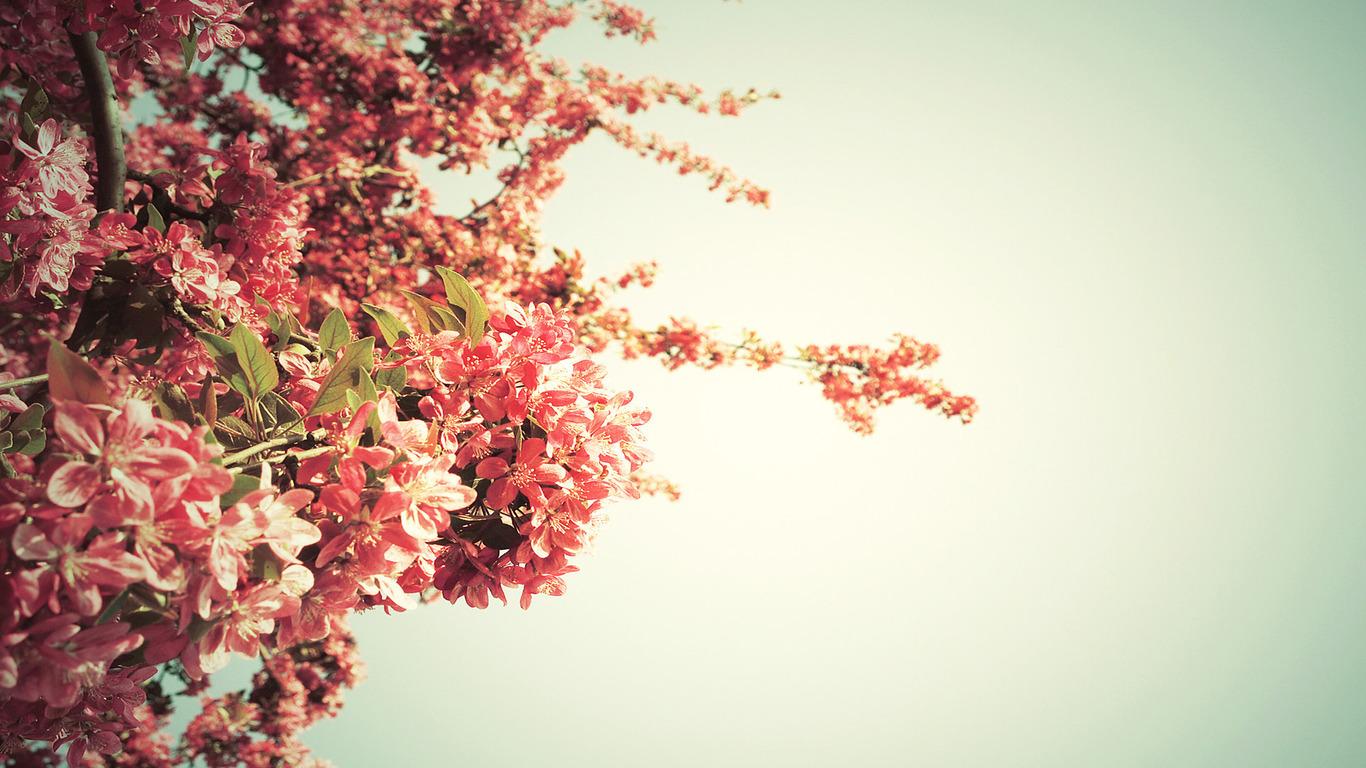 Spring flowers wallpaper backgrounds hd desktop wallpapers 4k hd spring flowers wallpaper backgrounds mightylinksfo