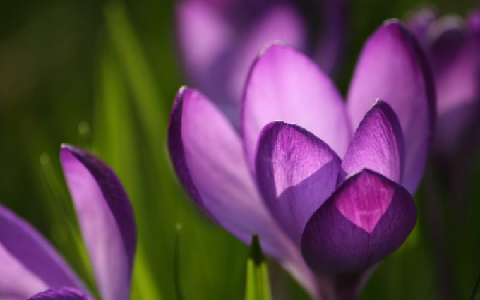 spring flowers wallpaper backgrounds