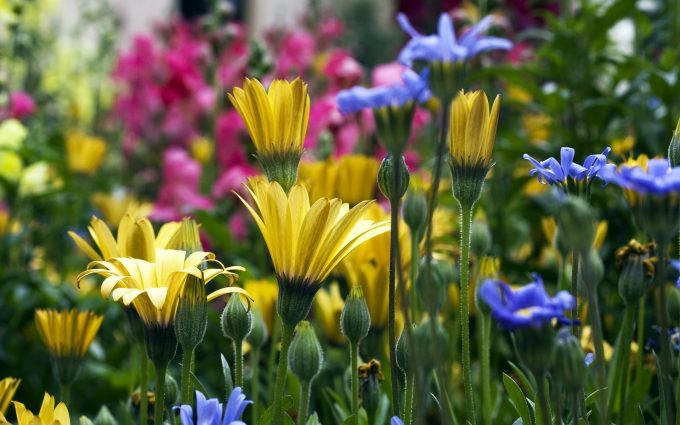 spring meadow pictures