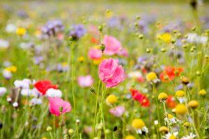 spring meadow wallpaper
