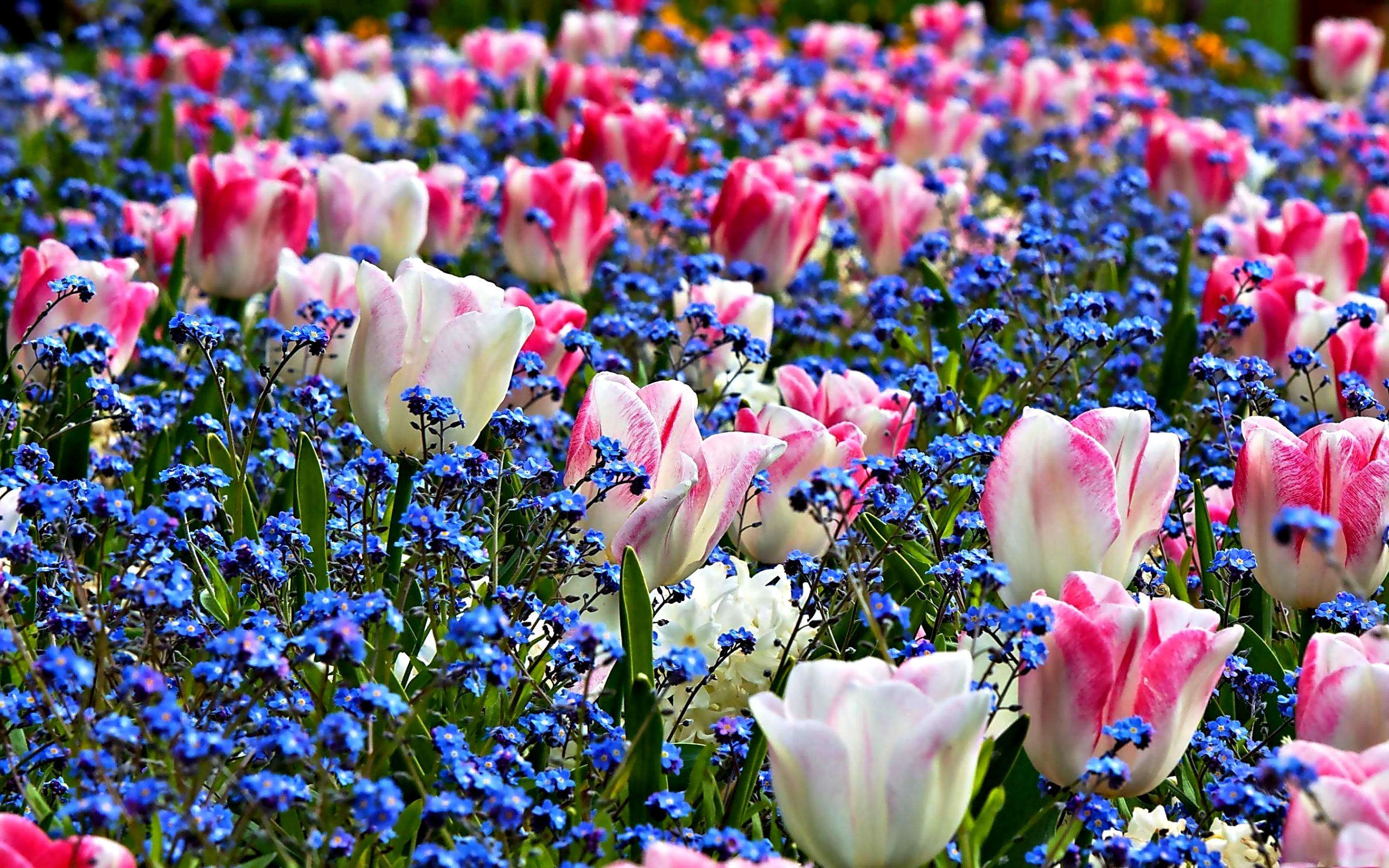 spring screensavers hd