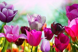 spring screensavers pc