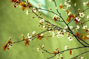 spring wallpaper A